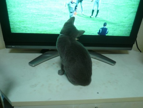 テレビも気になるらぃちゃん。