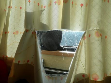 カーテン破れてるΣ(-∀-;)